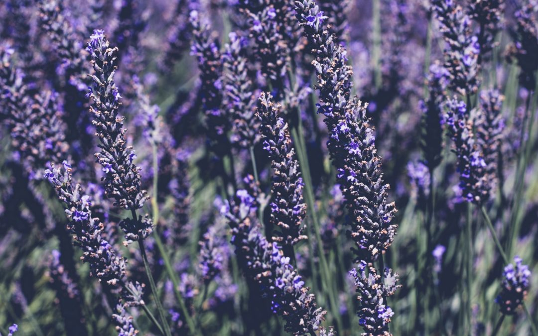Pass me the Lavender